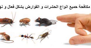 صورة مكافحة حشرات المنزل , ازاى تتخلص من الحشرات المنزلية بعيد عن الكيماويات وبكل سهولة
