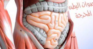 اسباب صوت البطن , اصوات البطن المحرجة اسبابها وعلاجها