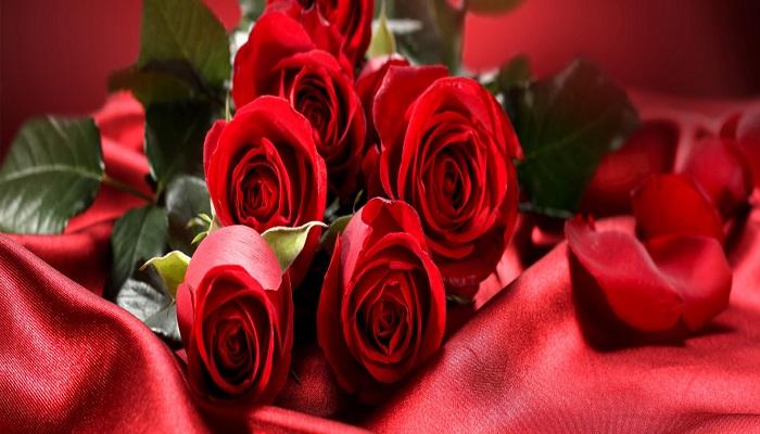 صورة الصور الورد الاحمر , ورود بالوان تحفة