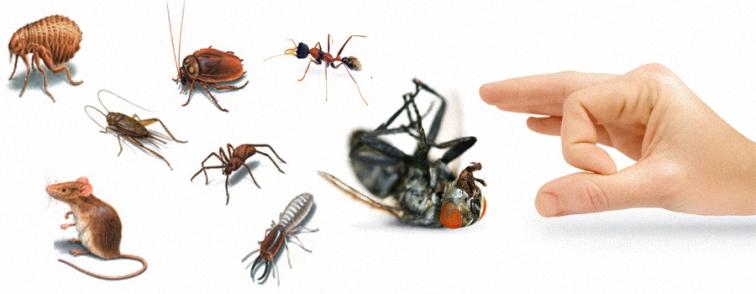 صورة شركه مكافحه حشرات بالدمام , مميزات شركه مكافحه الحشرات بالدمام