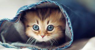 قطط صغيرة كيوت , اجمل القطط الصغيره الجميله
