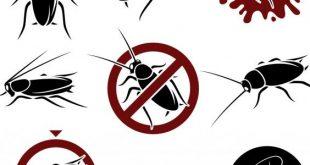 طريقة التخلص من الحشرات الصغير , كيفيه القضاء على الحشرات الصغيره