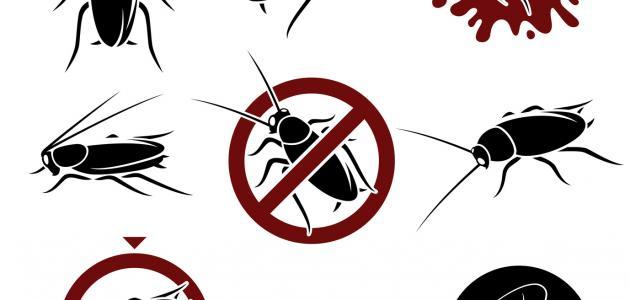 صورة طريقة التخلص من الحشرات الصغير , كيفيه القضاء على الحشرات الصغيره