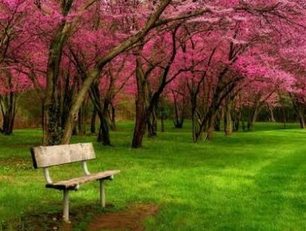صورة صور جميلة عن الطبيعة , صور اروع من الخيال