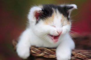 صورة صور قطط ظريفة , صور حلوة لمحبي القطط