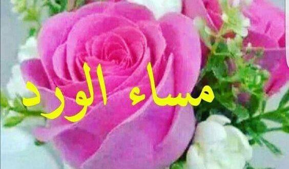 صورة مساء الورد الجميل , اجمل العبارات عن مساء الخير