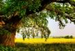 صور غرس شجرة في المنام , ما معنى زراعه الاشجار في المنام