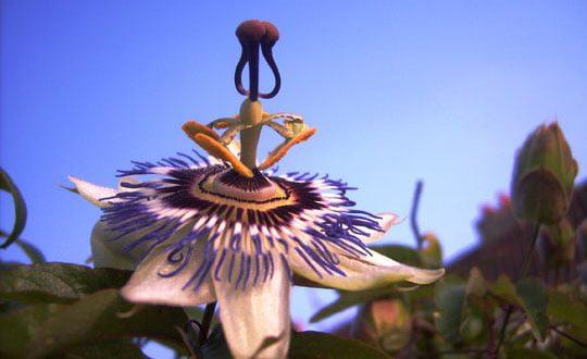صورة اغرب الورود في العالم , ياااه لم ارى ورودا غريبة مثل هذه