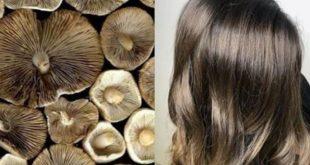صور الوان صبغة شعر 2019 , تالقى بجمال شعرك مع احلى الوان