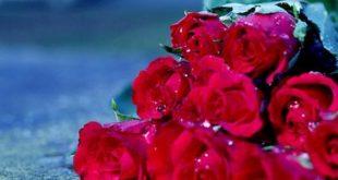 صورة يا هبة ربي من السما واجمل هدية , ارقى هدية من السماء هبة من ربى