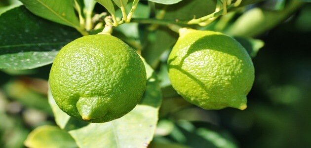 صورة تفسير حلم شجرة الليمون , تفسير رؤية شجر الليمون فى المنام