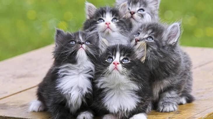 صورة تفسير حلم القطة الصغيرة , حلمت بقطة صغيرة