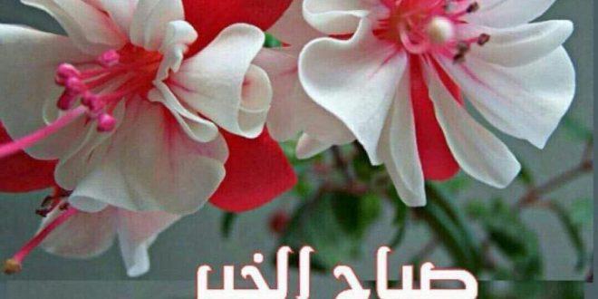 صورة اجمل صباح للحبيب , اجمل رساله صباحيه لروح قلبي