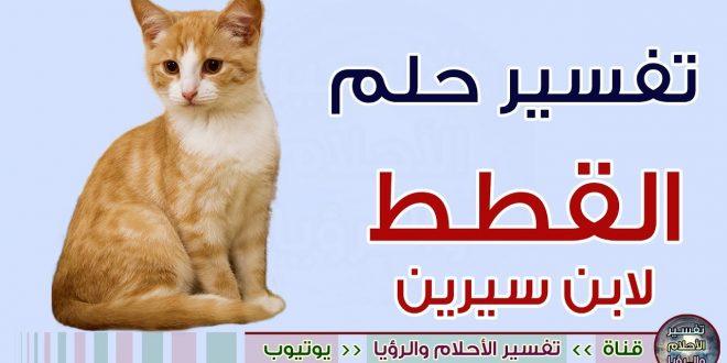 صورة تفسير القطة البيضاء في المنام , رايت قطه بيضاء منامى ماراى ابن سيرين