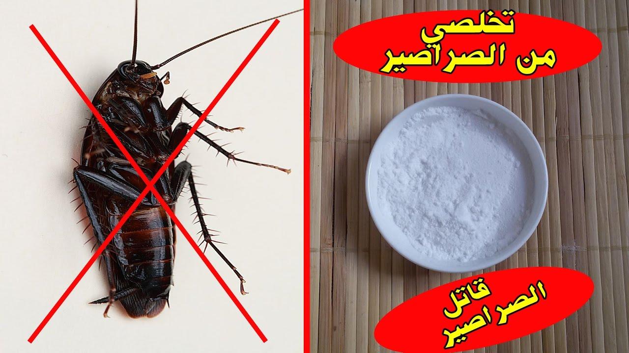 صور كيف نتخلص من الصراصير , تخلصى من الصراصير بهذه الوصفة