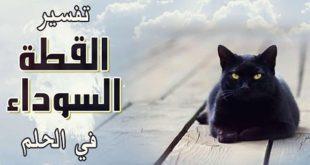 صورة رؤي القطط السوداء في المنامات لابن سيرين , تفسير حلم القط الاسود