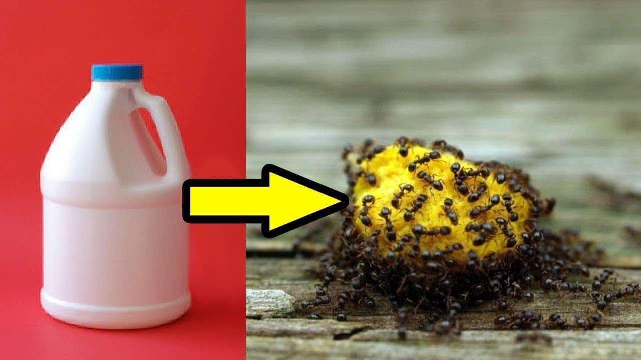 صورة التخلص من الذر , طريقة للقضاء على النمل