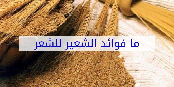 صورة فوائد الشعير للشعر والبشرة , شعر وبشره رائعين بمكون موجود في كل بيت