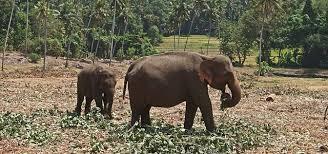 صورة كم وزن الفيل , اضخم الحيوانات واثقلها وزنا تعرف عليه